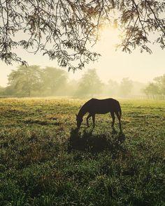 In the stillness stories are written. by littlecoal