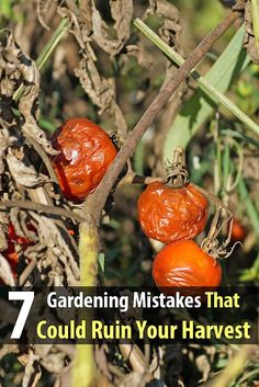 Not all of us are born with a green thumb, and mistakes are bound to happen. But you should be able to avoid some of the more common gardening mistakes.