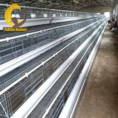 Henan Jinmuren Machinery Equipment Co. Chicken Cages, Quail, Quails