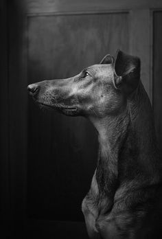 Photograph Window light by Elke Vogelsang on 500px