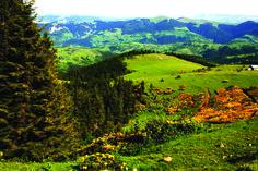 Giresun/Bektaş Yaylası-Plateau