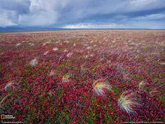Tundra landscape, Russia