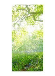 Baum im Gegenlicht Motivdruck Stoff 110 g/m², SCHWER ENTFLAMMBAR NACH B1.