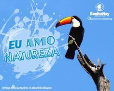 Para quem ama contemplar a natureza!  Foto: Tucano - Bonito/MS  #euamonatureza
