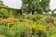 Mixed hot coloured plantings in an old boxwood parterre at Le Jardin Plume, Normandy.
