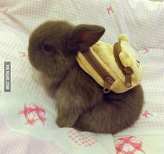Cuter than a little bunny? How about a little bunny wearing a teddy backpack.