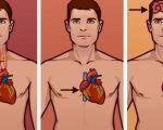L'alimento più potente al mondo che previene l'infarto e abbassa il colesterolo. Lo riconoscete? Questo è tutto ciò che accadrà al corpo dopo averlo assunto L'alimento ?