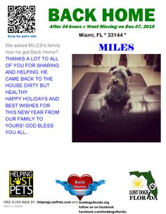 Helping Lost Pets   Dog - Schnauzer Standard - Back Home