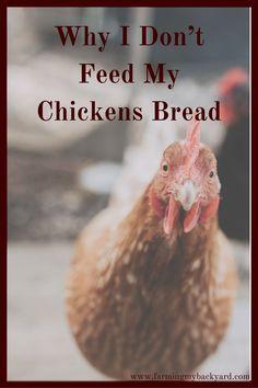 Pet Treats for chicken feeder chicken coop birdseed ornament pet food chicken scratch organic gardening bird feeder seed poultry treats