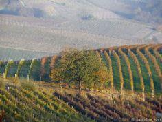 Itinerario ciclo-turistico Bubbio-Acqui Terme-Strevi-Ricaldone con ritorno da Sessame:Tramonto in vigna  ............................................Cyclo-tourist route Bubbio-Acqui Terme-Strevi-Ricaldone with return from Sessame: Sunset in the vineyard