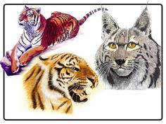 Tattoo Tigers by SubImageStudio on Etsy
