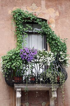 awwwwwesome wrought iron balcony with fabulous flowers!!!!!!!!!!!