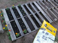 gardening in old pallets