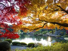 Smell the Flowers at the Shinjuku Gyoen National Garden - 16 Fun and Interesting Things to Do in Japan - EnkiVillage Shinjuku Gyoen, Shinjuku Japan, Japanese Gate, Japanese Style, Visit Tokyo, Cheap Plane Tickets, Japan Travel, Japan Trip, Air Travel
