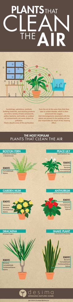 Infographic on plants that plants that clean the air.