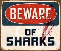 Shark Fin Soup, Shark Bait, Recipe For Shark Steak, Species Of Sharks, Apex Predator, Food Staples, Types Of Sharks