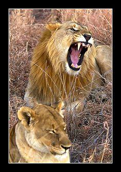 Animal, Madikwe Game Reserve, South Africa