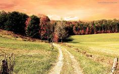 Download Field Path Wallpaper Free