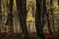 Hidden Beauty by Lars van de Goor - Photo 130481179 - 500px