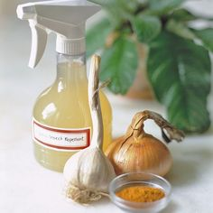 Keep slugs and aphids away from window boxes with a homemade, nonchemical pest spray. Place one peeled onion, two peeled garlic cloves, and one teaspoon cayenne pepper in the jar of a blender. Add three cups of water, and blend until smooth. Let the mixture sit overnight, strain the liquid into a spray bottle, and coat plants generously. The solution will keep, refrigerated in the bottle, for up to one week.
