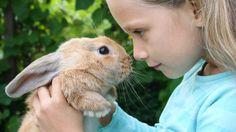Come capire il coniglio: il linguaggio vocale
