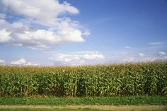 Learn How to Avoid GMO's in Your Food  Supply