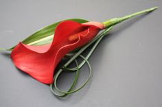 Stunning red cala lilly buttonhole.