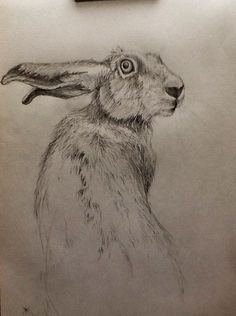 Hare-rough sketch Hare, Farm Animals, Unique Art, My Arts, Sketch, Quirky Art, Drawings, Sketching, Rabbit