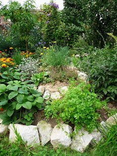 . Gardens, Herbs, Outdoor Decor, Plants, Outdoor Gardens, Herb, Plant, Garden, House Gardens
