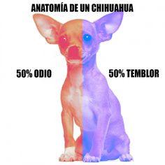 Anatomía de un chihuahua. Jeje