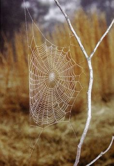 The creative Spider, spins a web and waits...