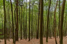 Wildnis-Trail Etappe 1 #Nationalpark Eifel | Tobias Grimm