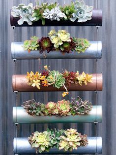 Lightweight and gorgeously glossy these cylinders are a showstopper when tied together to create a DIY hanging plant holder. Lightweight and gorgeously glossy these cylinders are a showstopper when tied together to create a DIY hanging plant holder. Hanging Air Plants, Hanging Succulents, Diy Hanging, Succulents Garden, Succulent Display, Succulent Ideas, Succulent Wall, Herbs Garden, Succulent Gardening