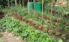 Der Weg zum ersten eigenen Gemüsegarten ist nicht schwer. Hier lesen Sie, wie viel Fläche Sie für eine vierköpfige Familie brauchen und welche wichtigen Aspekte bei der Planung und Anlage zu beachten sind.
