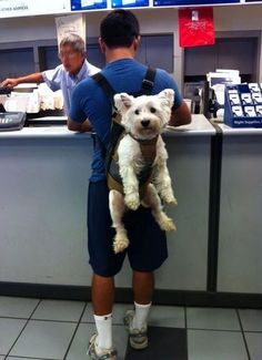 Parta carregar seu Pet por aí