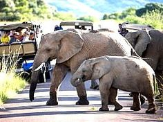 A place I have visited over the last 20+ yrs and always enjoyed amazing animal, bird, BIG and little 5 sitings - a lifetime of awesome experiences -Pilanesberg Game Reserve / National Park
