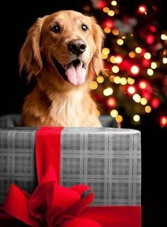 I would love to find one of these under my tree this year 2013