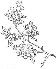 1886 Ingalls Apple Blossoms on Branch | Flickr - Photo Sharing!