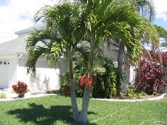 lush atrium in west palm beach fl west palm beach fl see more 2 ...