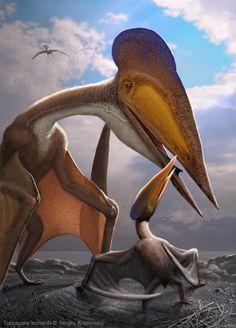Tupuxuara longicristatus: Early Cretaceous (112–108 Ma): Pteradactyloid: Discovered by Kellner & Campos, 1988: Artwork by Sergey Krasovskiy