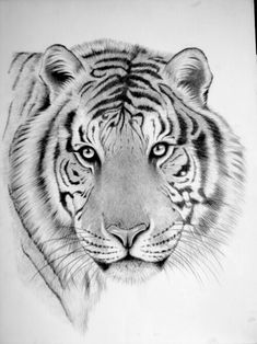 Pencil Drawings from a Color Blind Artist – Animal Drawing Wild Animals Drawing, Realistic Animal Drawings, Tiger Sketch, Tiger Drawing, Tiger Art, Funny Wild Animals, Wild Animals Photos, Wild Animal Wallpaper, Blind Artist