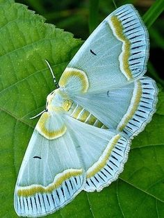 moth this one amazing
