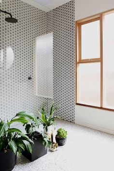 plants in the bathroom and those tiles /