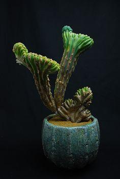 竜神木綴化 古木 Myrchillocactus geometorizans f. crist.