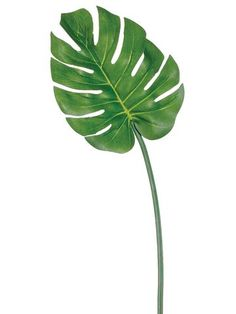 Adorable medium split philodendron leaf spray in vibrant green. Add a tropical touch to your floral arrangements with this pretty green artificial philodendron leaf. The perfect accent and filler to c Tropical Flowers, Tropical Leaves, Tropical Plants, Artificial Palm Leaves, Artificial Plants, Fake Flowers, Silk Flowers, Silk Orchids, Philodendron Monstera