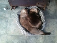 Curly......you don't fit. You need a dogbed.