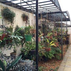 Hanging Basket Garden, Garden Center Displays, Orchid House, Brick Patterns Patio, Vertical Garden Design, Backyard Greenhouse, Backyard Patio, Shade House, Orchids Garden