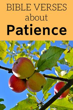 What kind of fruit are you bearing? This Bible Verses About Patience post will help you figure that out. #bibleversesaboutpatience #patienceinthebible #versesaboutpatience
