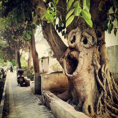 Tree in Tel-Aviv, Israel