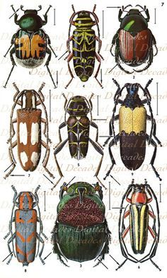 Beetles With Beautiful Color Combinations From The